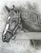Race Drawings Originals - Rachel Alexandra by Patrice Torrillo