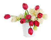 Bucket Photos - Red and white tulips by Elena Elisseeva