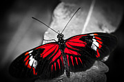 Exotic Leaves Prints - Red heliconius dora butterfly Print by Elena Elisseeva