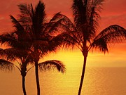 Tropical Photographs Photos - Red Sunset. by Athala Carole Bruckner
