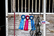 Dressage Prints - 3 Ribbons Today Print by Rich Franco