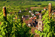 Grape Vines Prints - Riquewihr Alsace Print by Brian Jannsen