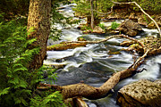 Water Flowing Photo Prints - River rapids Print by Elena Elisseeva