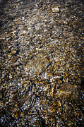 Lakeshore Prints - Rocks in water Print by Elena Elisseeva