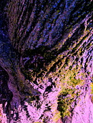 Tree And Wood Photography - Root Of The Matter by Allen n Lehman