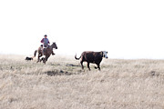 Cowboy Life Prints - Round Up Print by Cindy Singleton