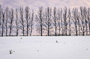 Fencing Photo Framed Prints - Rural winter landscape Framed Print by Elena Elisseeva