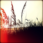 Florida Flowers Prints - Sea Oats Print by Chris Andruskiewicz