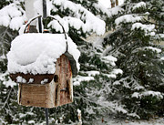 Birdhouse Photos Photos - Snow day by Krista Kulas
