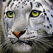 Leopards Paintings - Snow Leopard by Jurek Zamoyski