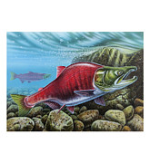 Jq Painting Prints - Sockeye Salmon Print by JQ Licensing