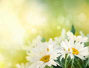 Mythja Art - Spring background by Mythja  Photography