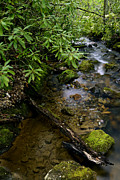 Mountain Stream Art - Spring Monongahela National Forest by Thomas R Fletcher