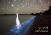 Luminescence Posters - Star Trails And Bioluminescence Poster by Philip Hart