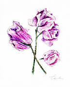 Green Foliage Drawings Prints - Sweet pea Print by Danuta Bennett