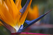 Strelitzia Art - Take Time to Dream by Sharon Mau