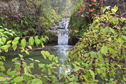 Photos Of Autumn Prints - Texas Hill Country Images - Twin Falls in Autumn at Pedernales F Print by Rob Greebon