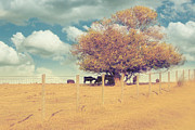 Country Wall Art Prints - The Cow Tree Print by Amy Tyler