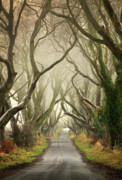 1:1 Prints - The Dark Hedges  Print by Pawel Klarecki