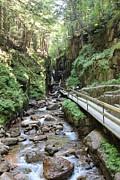 Jeffrey  Akerson - The Flume Gorge