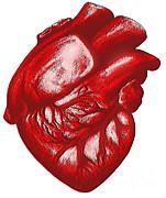 The Human Heart Print by Dennis Potokar