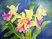 Orchids Art Print Framed Prints - Three Cattleyas Framed Print by Kathleen Rutten