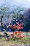 Red Tree Prints - Tree Print by Lyubomir Kanelov