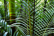 Bush Metal Prints - Tropical jungle Metal Print by Les Cunliffe