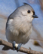 Kathy Rinker - Tufted Titmouse