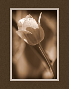 Matting Framed Prints - Tulip CloseUp Framed Print by Charles Feagans