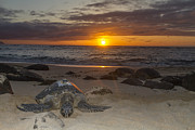 Laniakea Beach Prints - Turtle Beach sunset Oahu Hawaii Print by Jianghui Zhang
