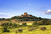 Vineyards Photos - Tuscany - Pienza by Joana Kruse