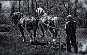 Greyhound Photos - Walking The Plow by F Leblanc