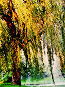 Garden Scene Digital Art Posters - Weeping Willow Tree  Poster by Carol F Austin