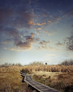 Escape Photo Posters - Wetland walk Poster by Les Cunliffe