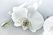 Design Windmill - White Orchid