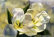 Alfred Ng -  Flower-white tulips