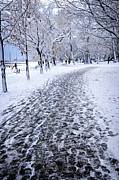 Snowy Road Photos - Winter park by Elena Elisseeva