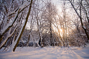 Sunlight Art - Winter white forest by Michal Bednarek
