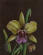 Cyndi Kingsley - Yellow and Purple Orchid