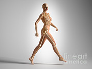 Vertebral Ribs Posters - 3d Rendering Of A Naked Woman Walking Poster by Leonello Calvetti