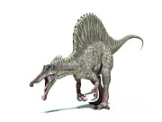 Animal Themes Digital Art - 3d Rendering Of A Spinosaurus Dinosaur by Leonello Calvetti