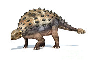 One Animal Digital Art - 3d Rendering Of An Ankylosaurus by Leonello Calvetti