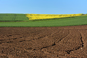 Color Yellow Framed Prints - Agricultural landscape. Auvergne. France. Framed Print by Bernard Jaubert