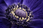 Beauty Mark Art - Anemone by Mark Johnson