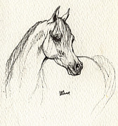 Horse Drawings - Arabian horse drawing by Angel  Tarantella