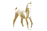 Mammals Originals - Arabian Horse by Tommy Hammarsten
