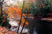 Trout Photo Posters - Autumn along Williams River Poster by Thomas R Fletcher