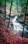 Autumn Foliage Photo Posters - Chesterfield Gorge New Hampshire Poster by Edward Fielding