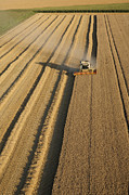 Agronomy Photos - Combine Harvesters At Work by Laurent Salomon